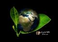 استاندارد بین المللی سیستم مدیریت محیط زیست