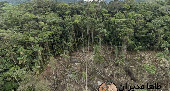 جنگلی در حال نابودی